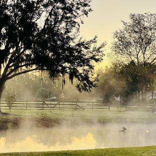 morning-5923617_1920.jpg