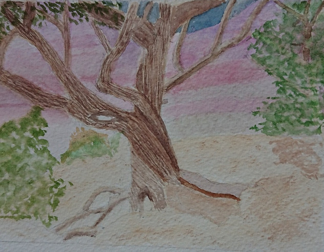 Clare Grand Canyon Tree.jpg