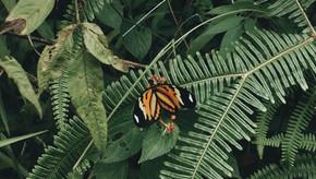 NbS: Conheça as Soluções Baseadas na Natureza
