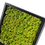 Thumbnail: Quadro Musgo Escandinavo 50x50 - Mold PR -  VERDE LEMON