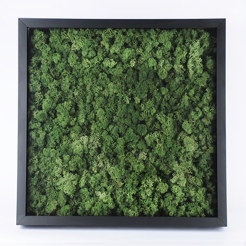 Quadro Musgo Escandinavo 50x50 - Mold PR - VERDE JUNGLE