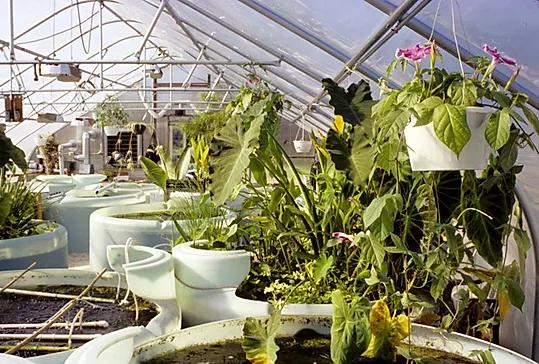 John Todd Ecological Design,