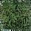 Thumbnail: Jardim Vertical Preservado m²