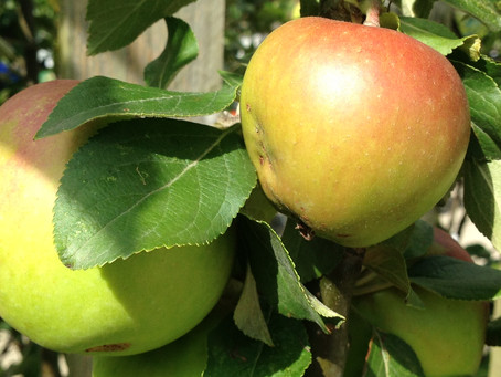 Heritage Apples Special Offer for Heritage Week 18th - 26th August 2018