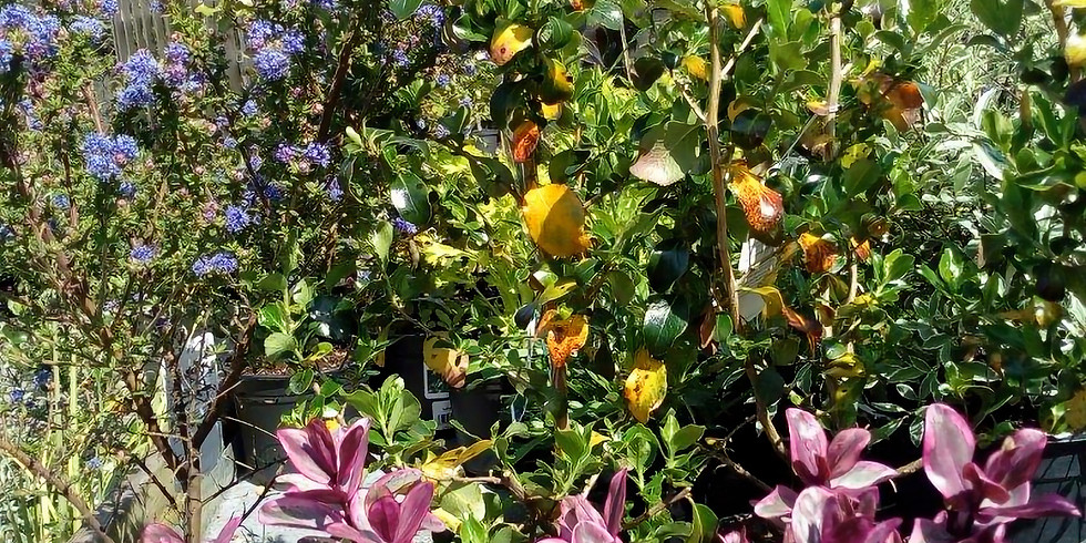 Keeping Your Garden Healthy & Productive