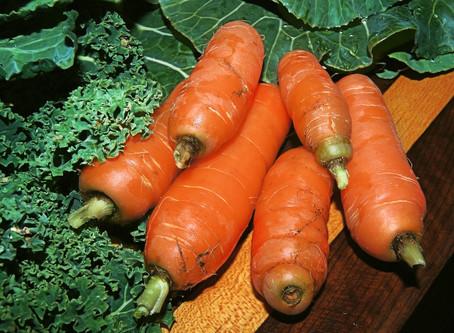 Creating a Traditional Irish Kitchen Garden for Heritage Week