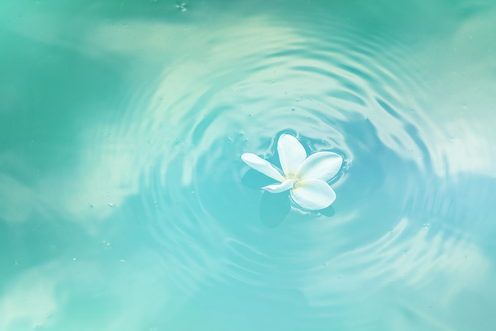 Blossom in water