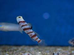 acquario mediterraneo-384.jpg