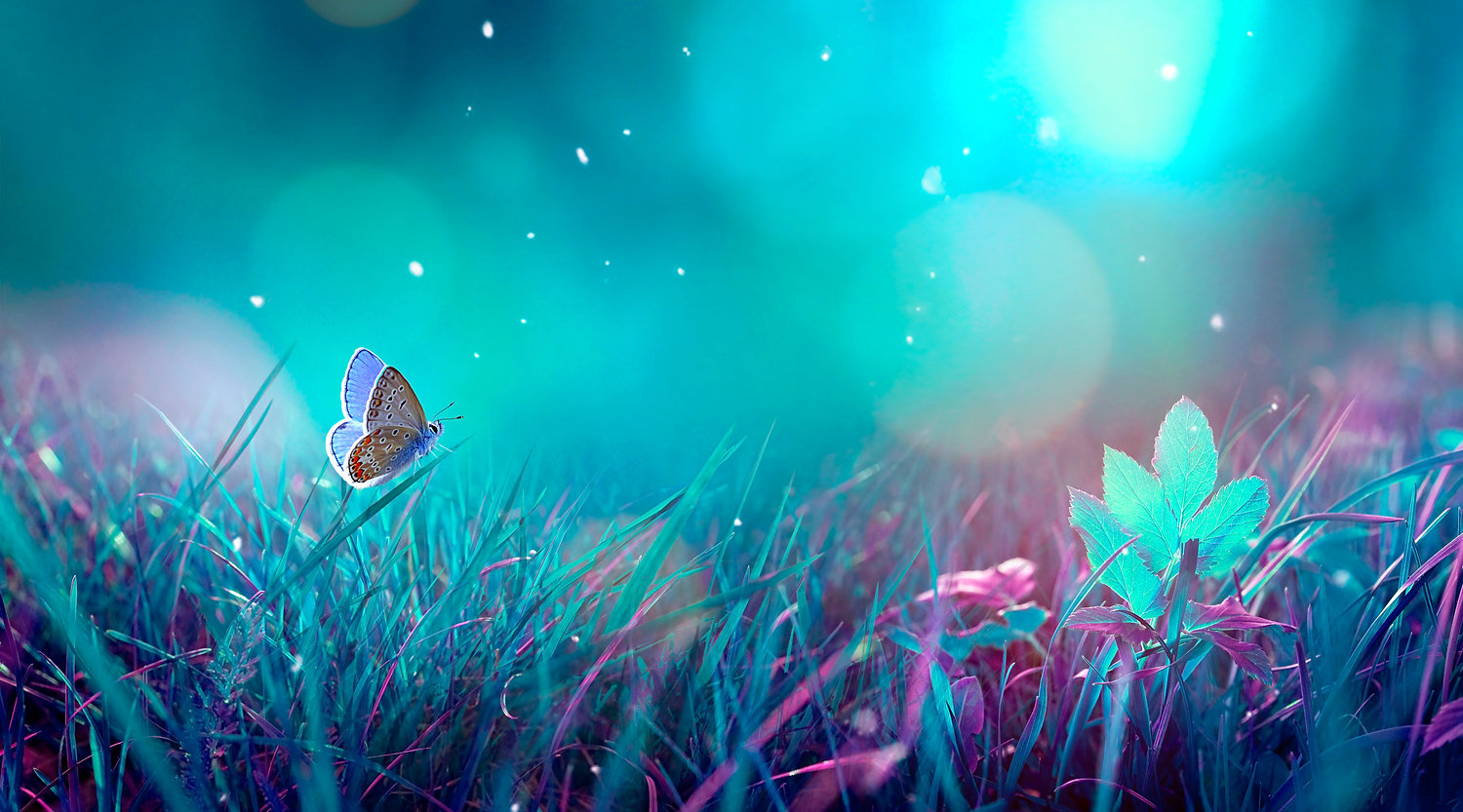 Butterfly in the grass on a meadow at ni