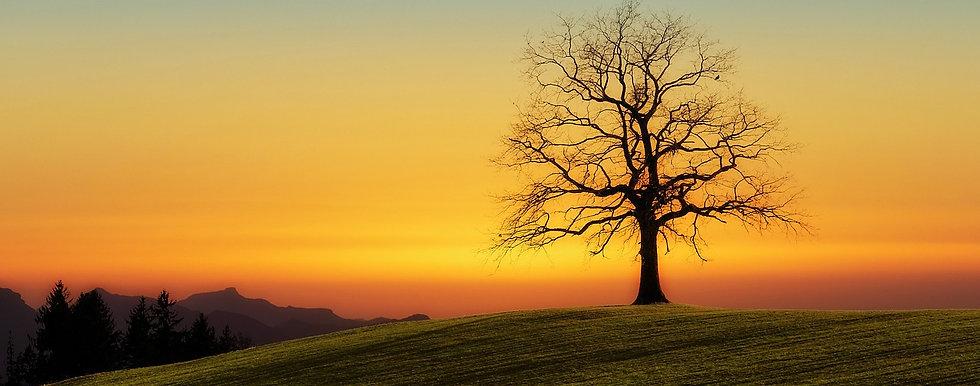 tree-3072431_1280.jpg