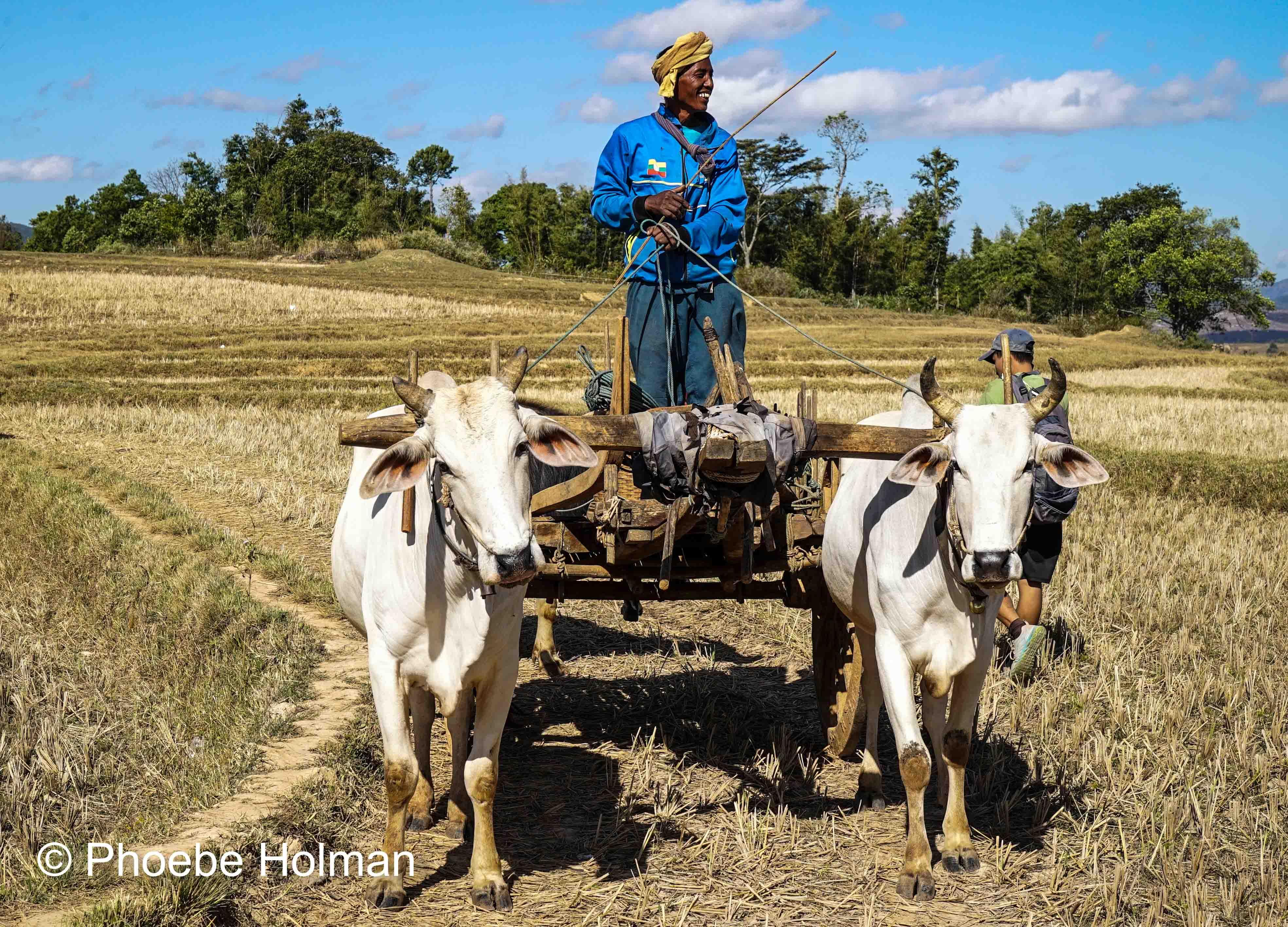 Kalaw Farmer Myanmar