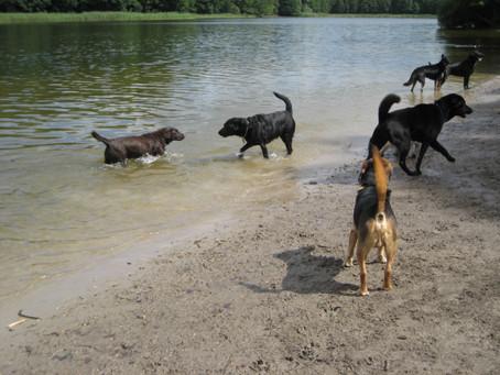 Hundes platz(フンデスプラッツ)