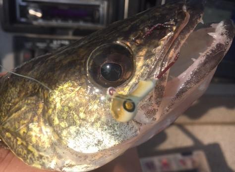 Fishing Report 6/4