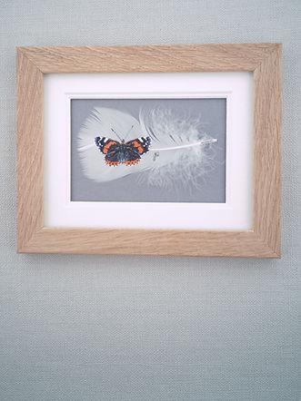 framed butterfly.jpg