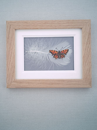 framed red admeral butterfly.jpg