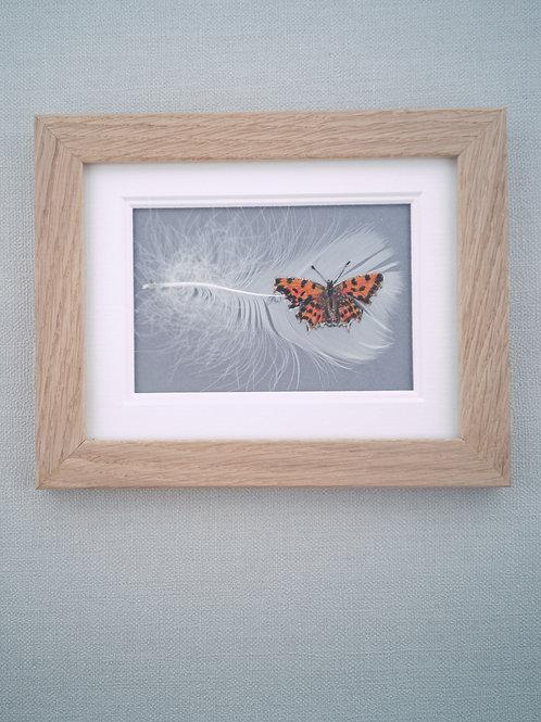 'Comma Butterfly'