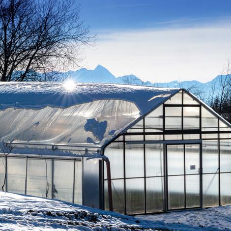 großes Gewächshaus Winter.jpg
