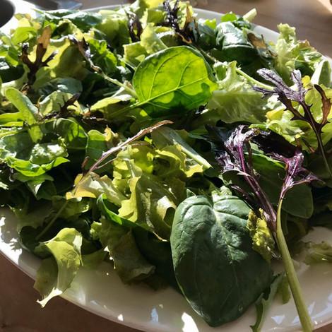 Baby Leaf Salat