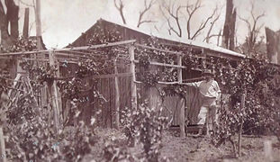 Kalamunda Oral History, Spriggs