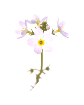 34. water violet.png