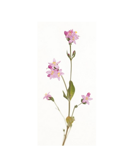 4. centaury.png