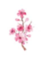 6. cherry plum.png