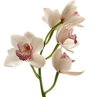 Flores de Bach, terapeuta buena, La Florida, Santigo, Chile, Normita Medina, Norma Medina, medicina natural, flor, control de las emociones