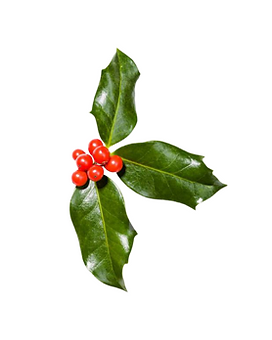 15. Holly (acebo).png