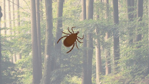 Can Lyme disease be transmitted from one person to another?