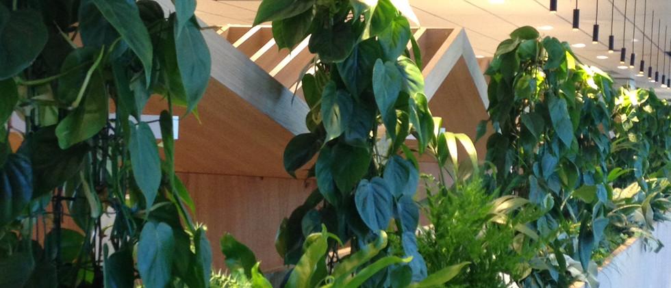 plantevegg.JPG