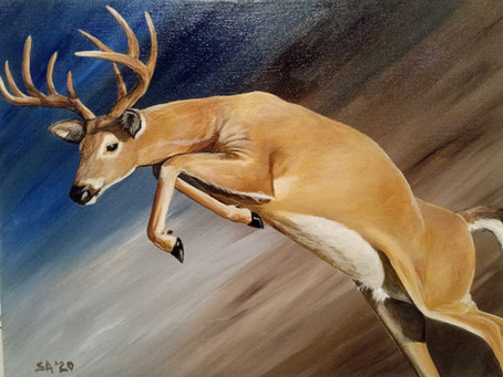 Painting White Tail Deer In Virginia's Hunting Season