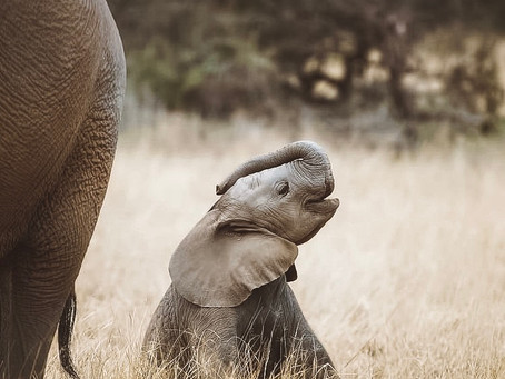 6 facts about baby elephants that will make you want to have one yourself!
