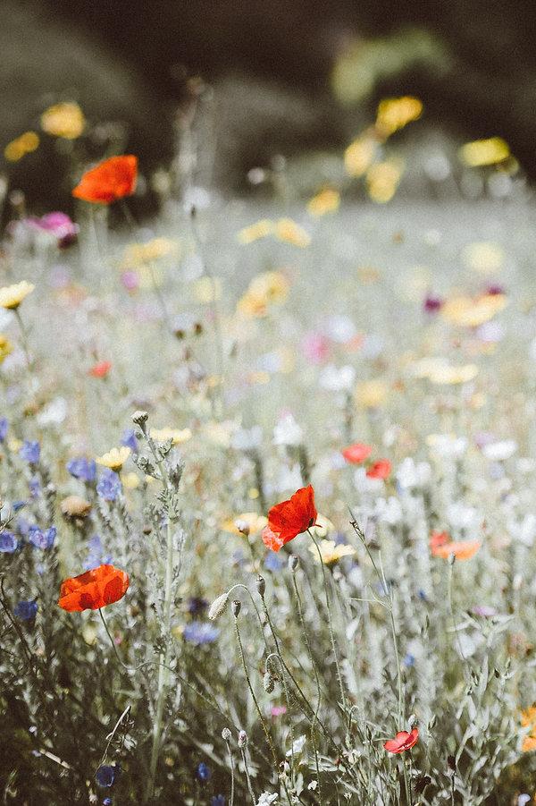 FlourishWildly-BrandingPhotography-Flowe