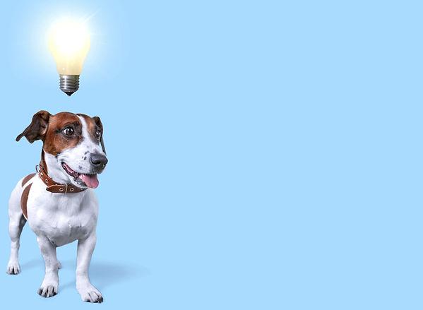 brainwork for dogs