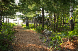 The Path to the Lodge