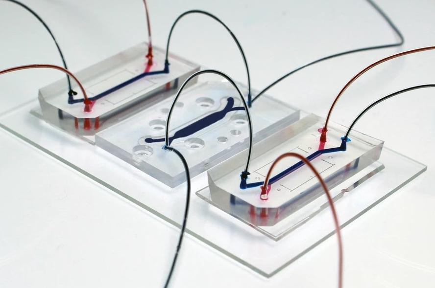 """Organs on chip"" מתוך אתר המעבדה של בן מעוז."