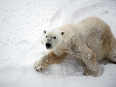 Polarne životinje