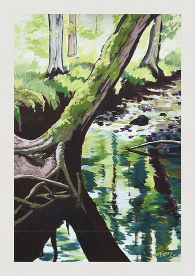 Tree Reflections at Littleburn Woods - Open Edition Print