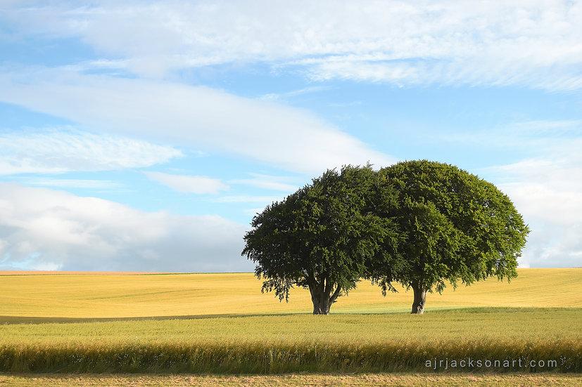 Trees on Roskill Farm Road