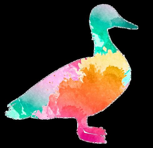 duck logo color transparent back_edited_edited.png
