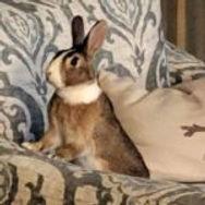 adopt rabbit