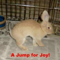 JumpForJoy.jpg