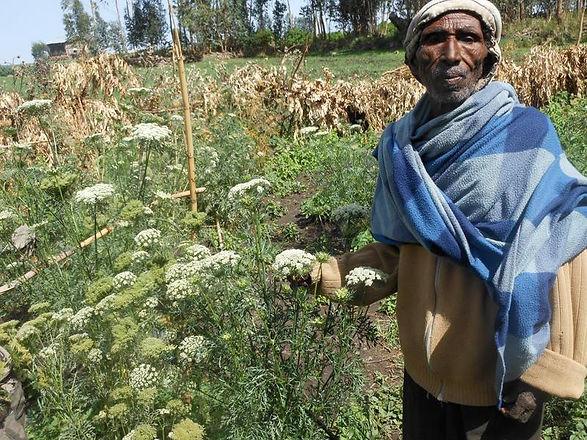 Kossoye Farmer.jpg