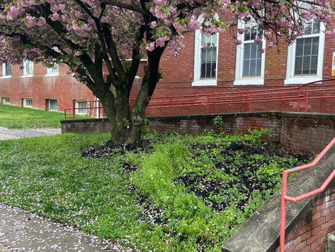see how the guerrilla gardening turned out!