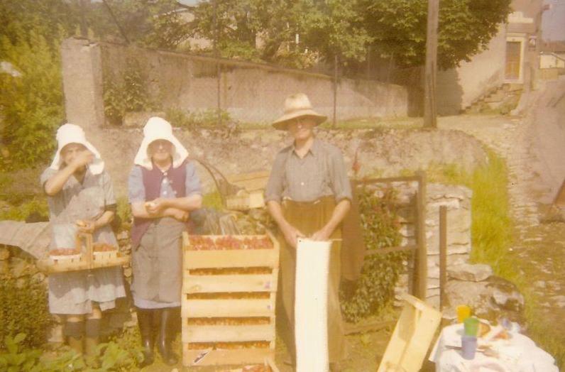 Les années 1950 - La cueillette des fraises
