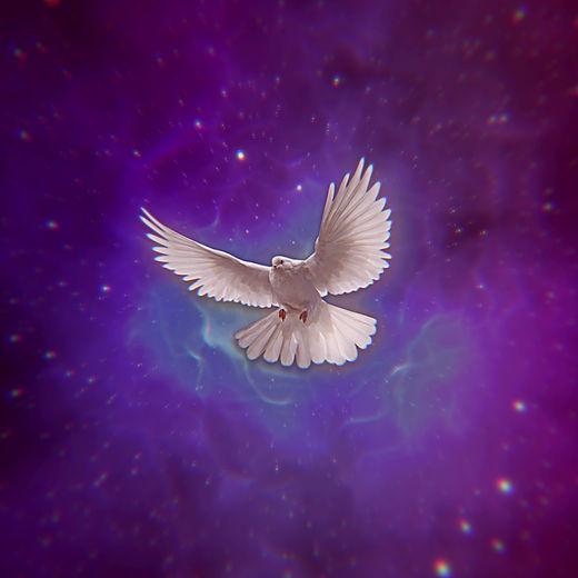 Holy Pigeon