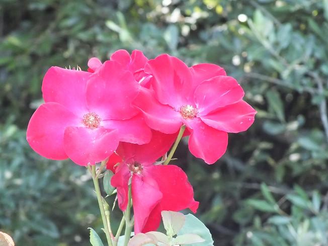 Le jardin des merveilles - Matae B9f3c2_1c5c1e39ee114e3cb2a6c8275fd8efb5~mv2_d_3264_2448_s_4_2