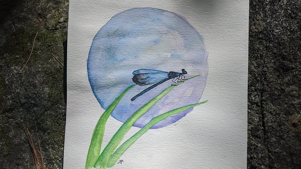 Moonlit Dragonfly