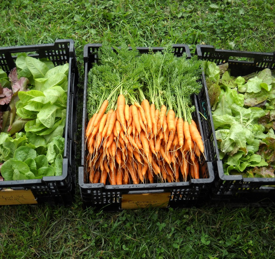 Our CSA