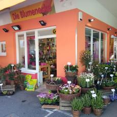 Galerie_Die Blumenecke.jpg